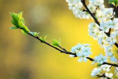 İlkbahar Başlangıcı 2018
